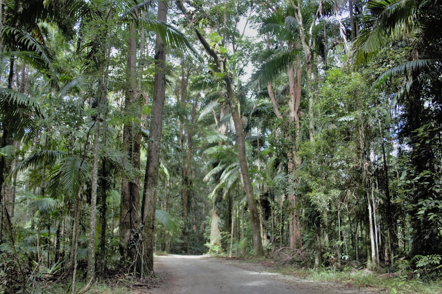 Crystal-Creek-Rainforest-Retreat-Arrival.-Image-Kate-Webster