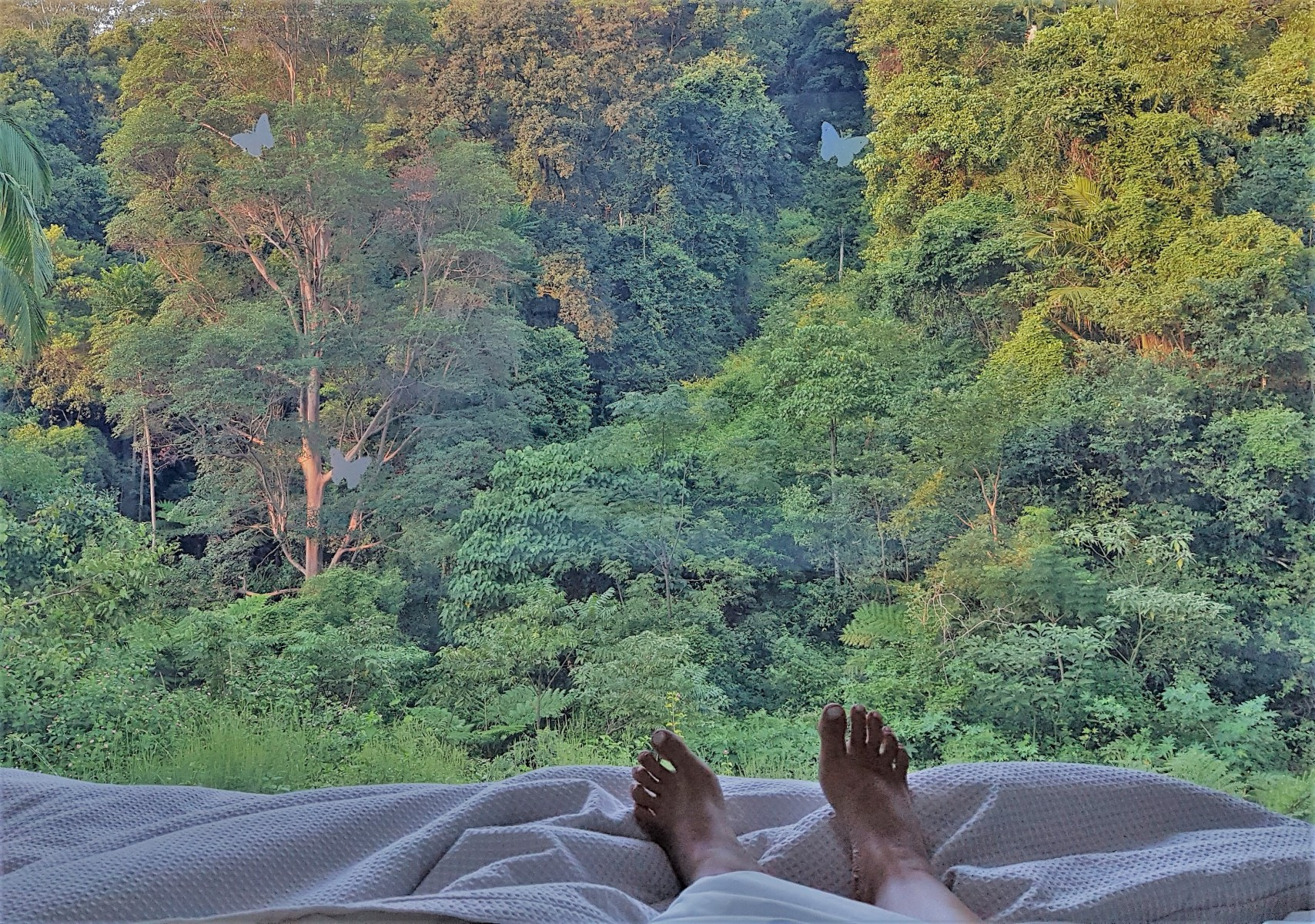 Crystal-Creek-Rainforest-Retreat-Lamington-Lodge-Bedroom-View-from-Bed.-Image-Kate-Webster