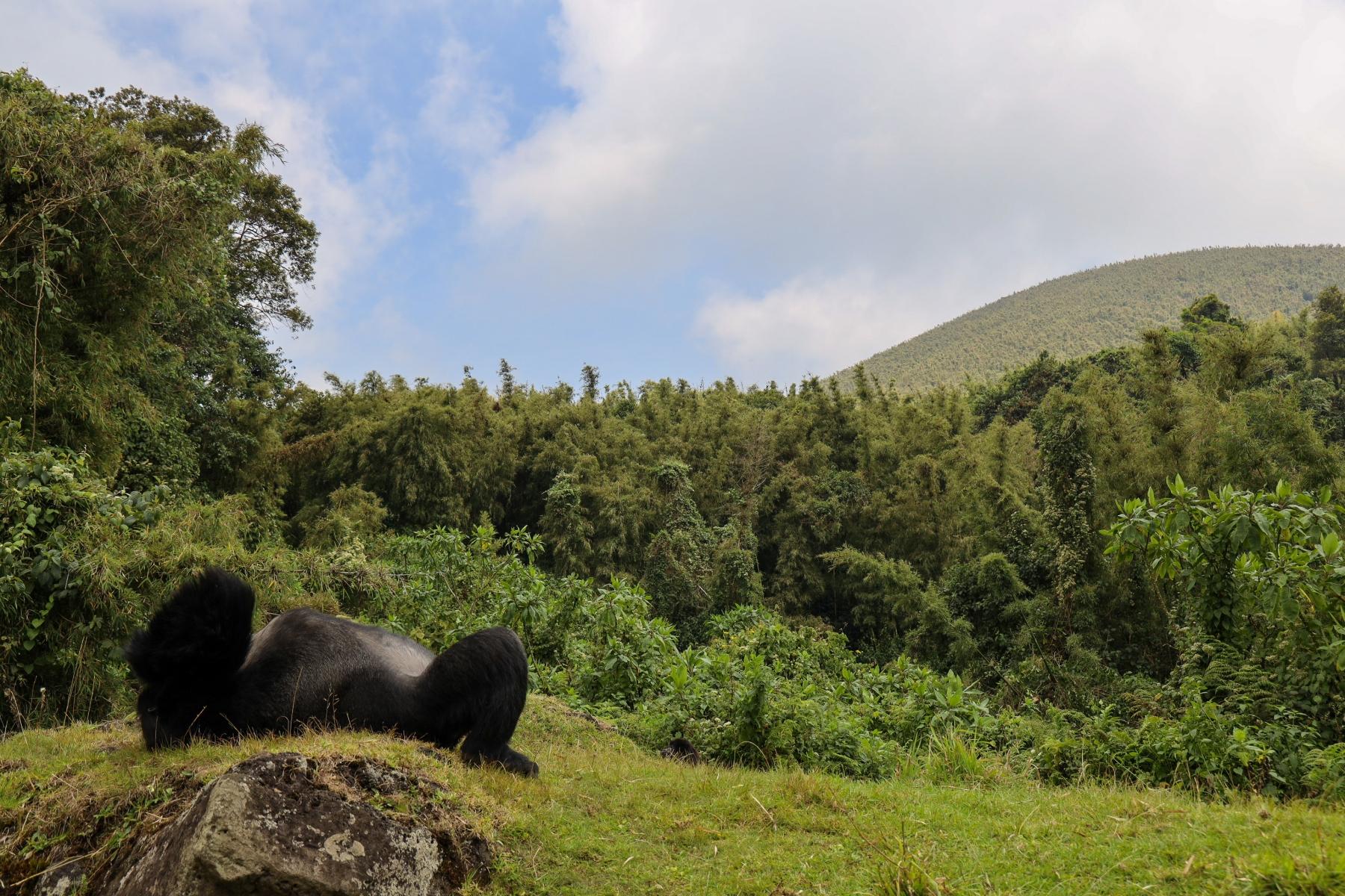 Rwanda-Gorilla-Trekking-Photo-Credit-Kate-Webster-017