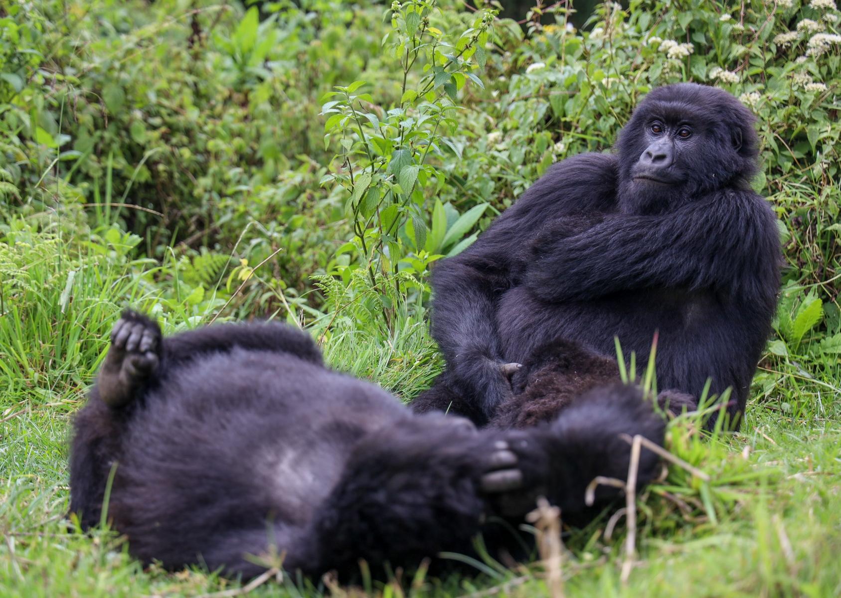 Rwanda-Gorilla-Trekking-Photo-Credit-Kate-Webster-106