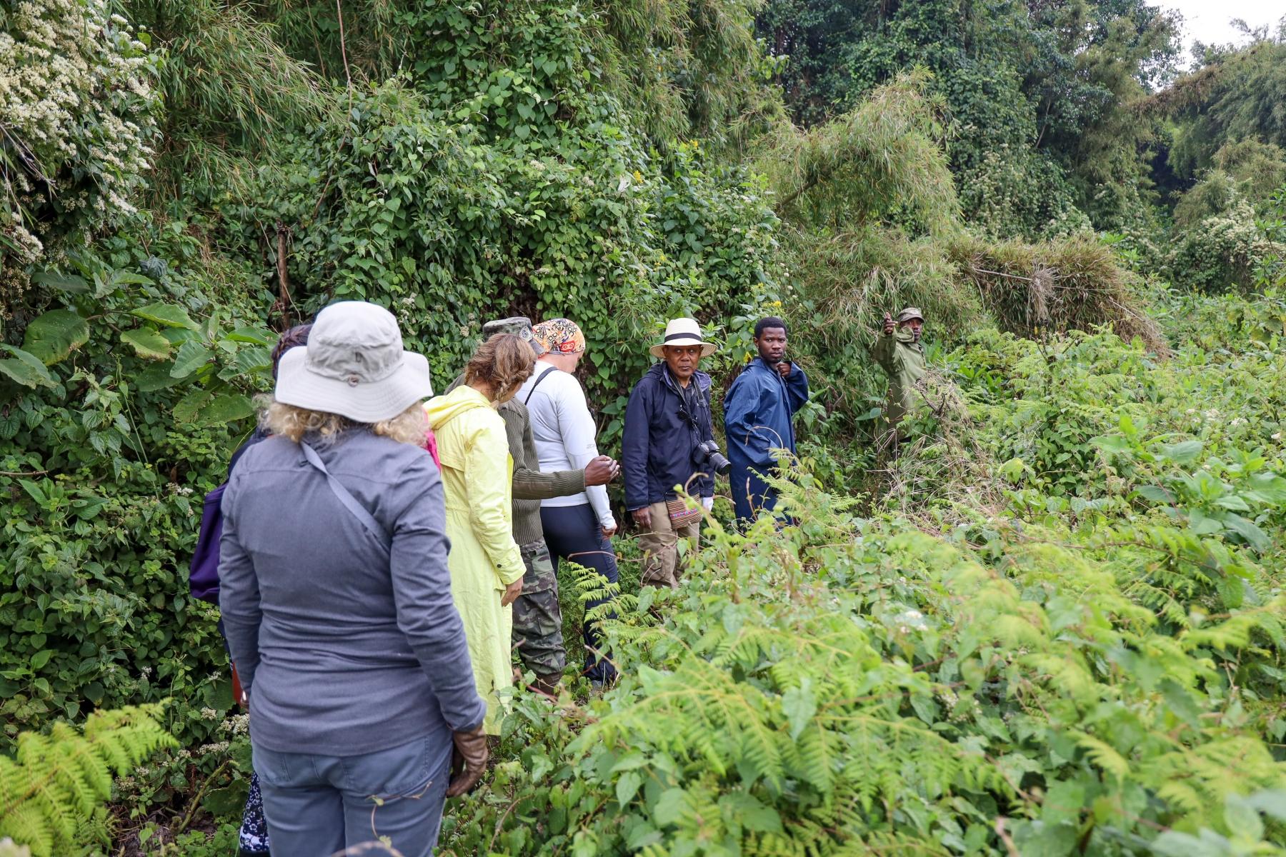 Rwanda-Gorilla-Trekking-Photo-Credit-Kate-Webster-159
